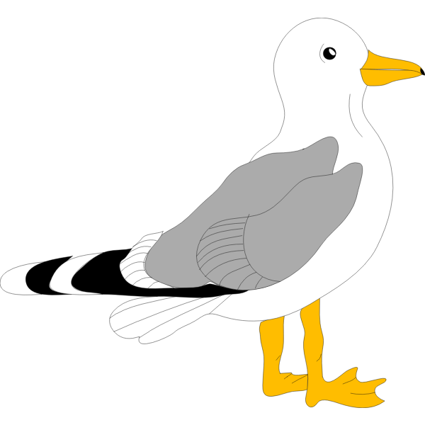 Drawing of gull with grey feathers