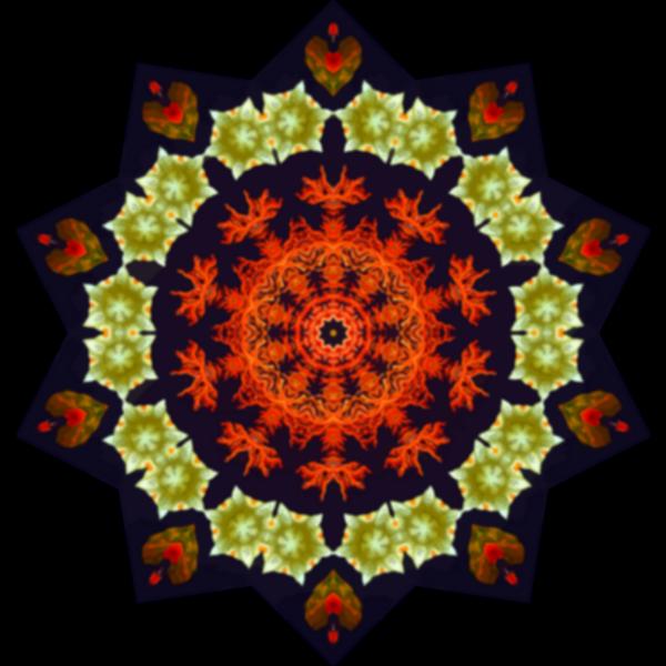 Ascidiae3