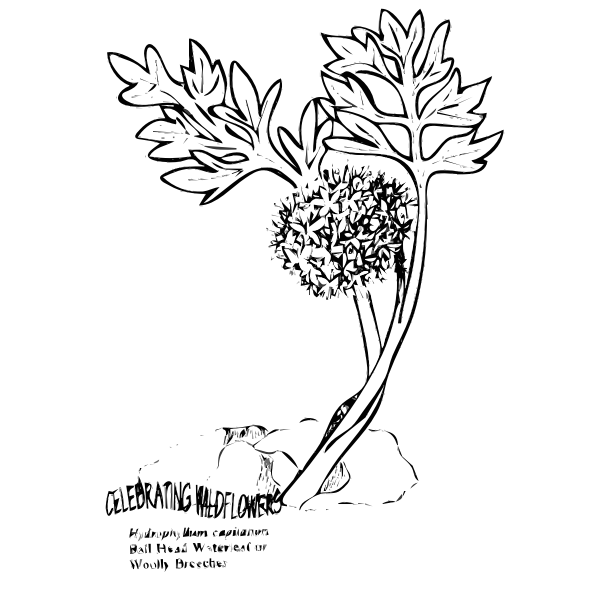 Plant with leaves line art vector clip art