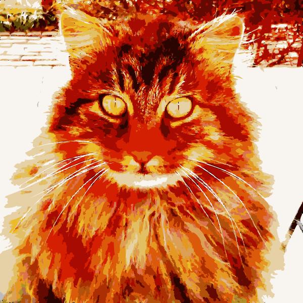 Barack the cat says 2015011411