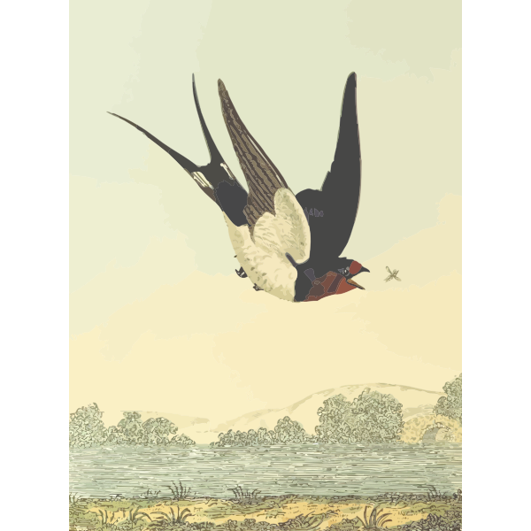 Barn swallow bird on a nature scenery vector drawing