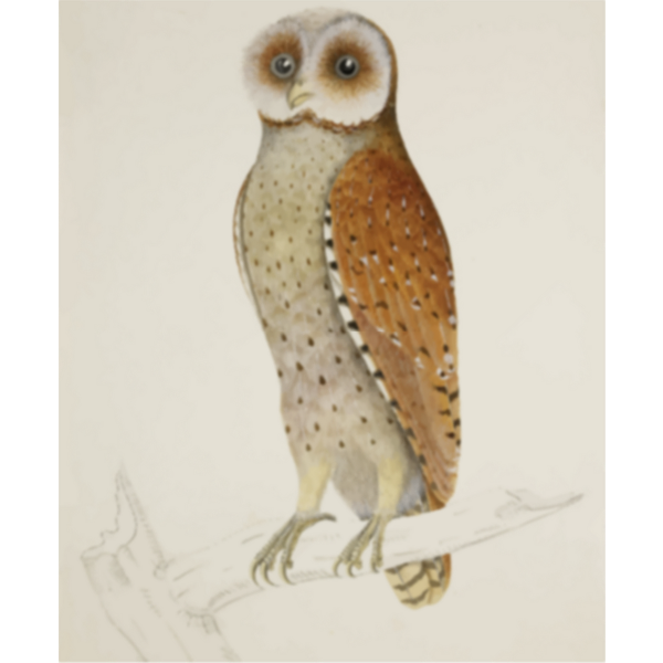 Brown owl on a tree branch vector clip art