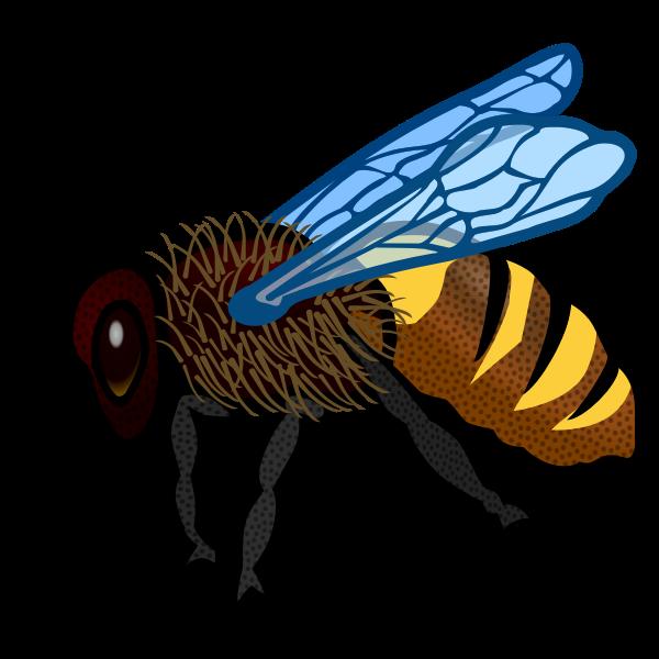 Bee close-up image