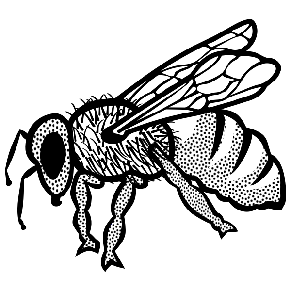 Outline vector drawing of bee