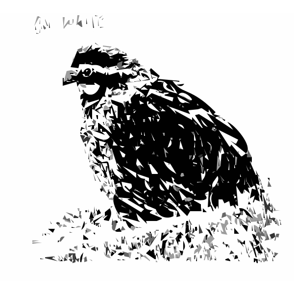 Bob White Bird