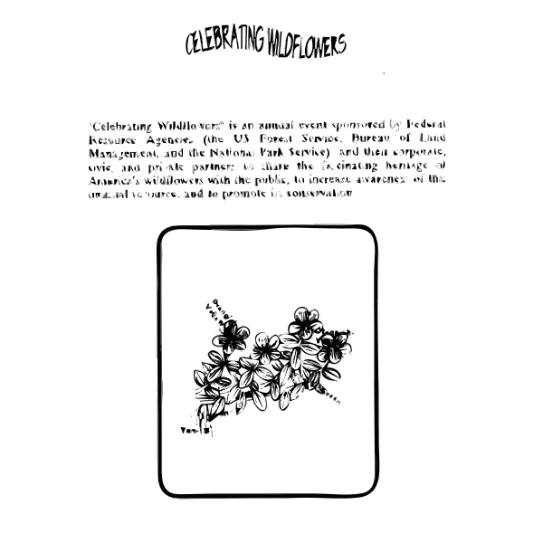 Bog St. Johns Wort Coloring Guide