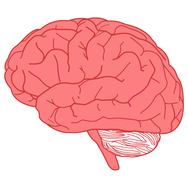 Brain profile