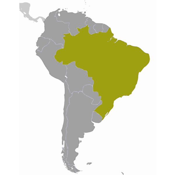 Brazil location map vector drawing