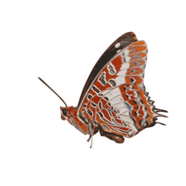 Charaxes brutus butterfly vector graphics