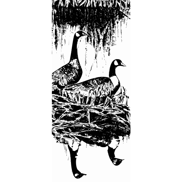 Geese vector image