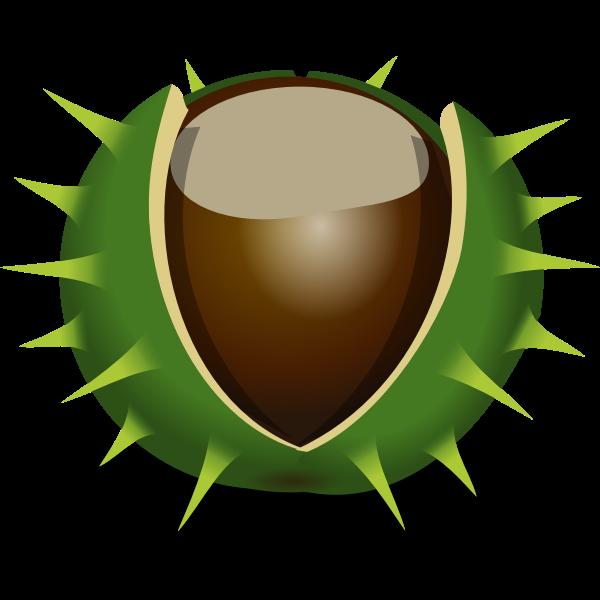 Chestnut in shell vector image