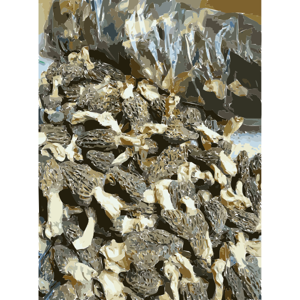 Chinese factory directly supply dry mushroom Porcini Shiitake Champignons 1 2016011642