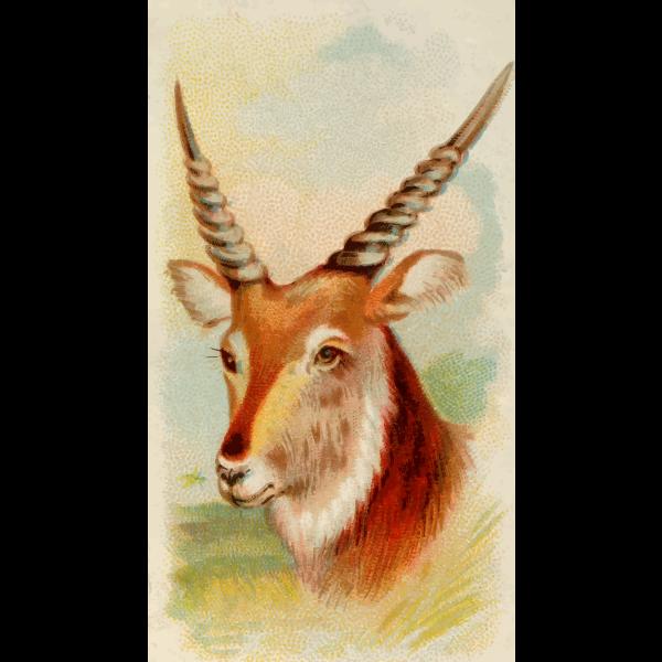 Senegal antelope