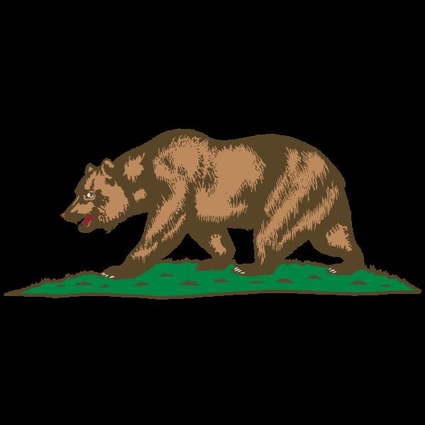 Bear walking on grass vector image
