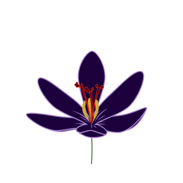 Crocus blossom vector image