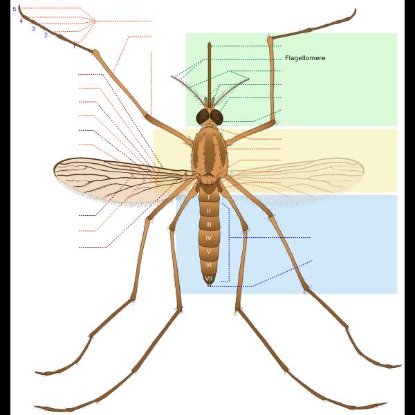 Mosquito parts