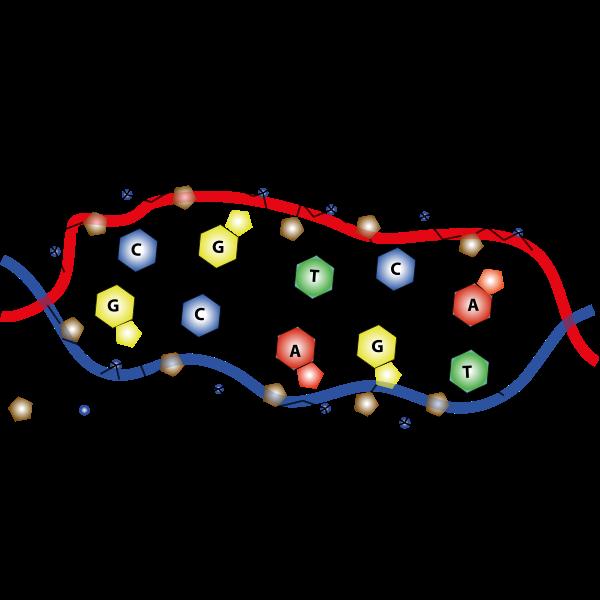 DNA Kette komplett