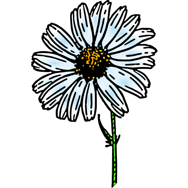 Colored daisy flower