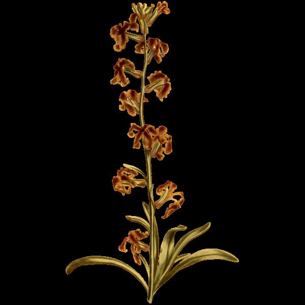 Dark-Flowered Stock
