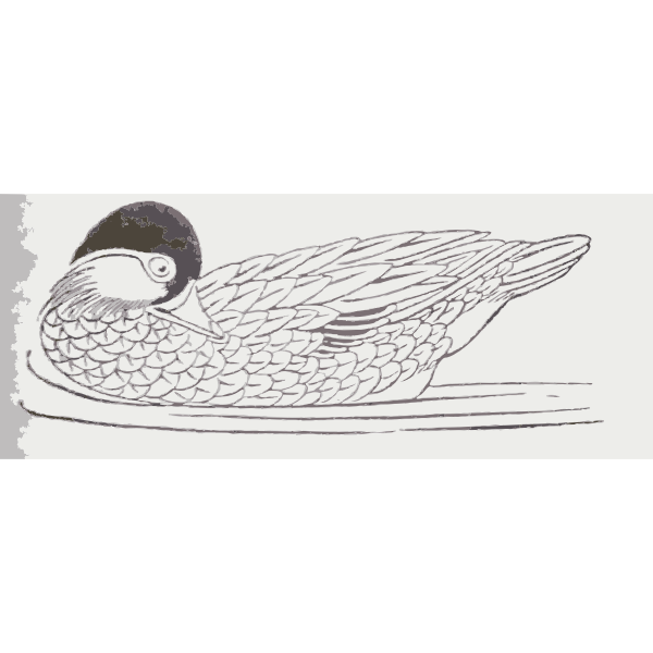 Clip art of duck swimming and looking behind
