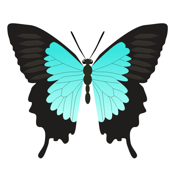 Butterfly teal color