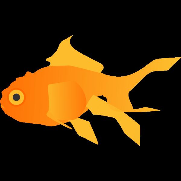 FX13 goldfish