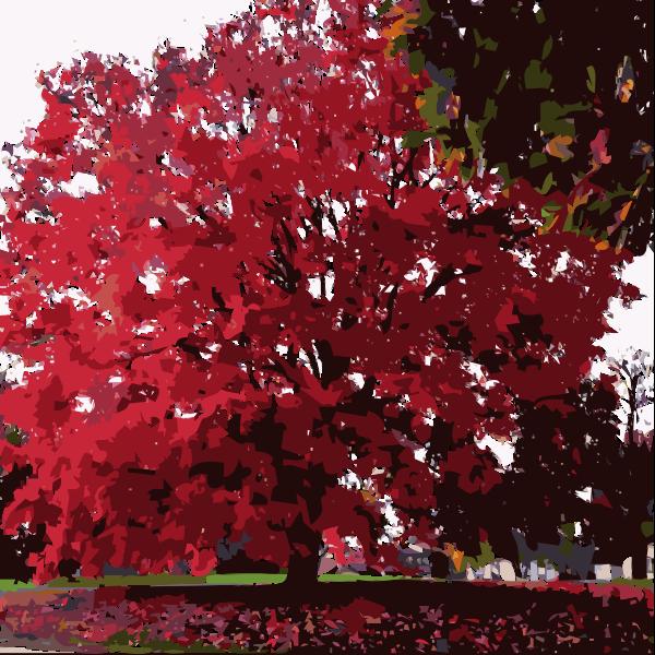 Fall Tree Again 2015053131