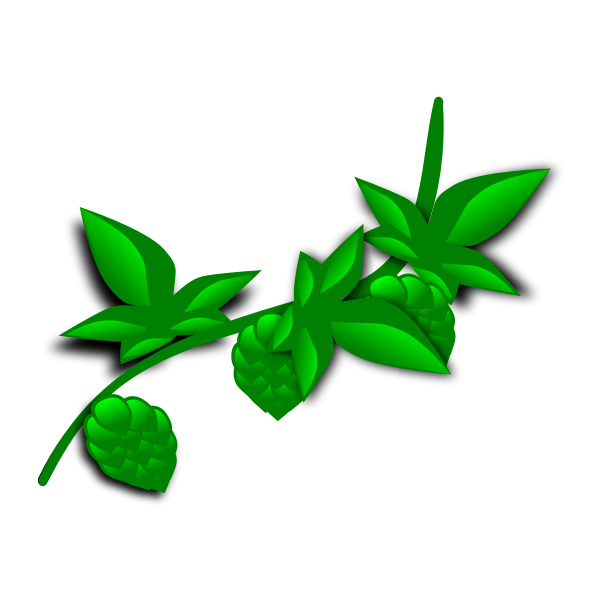 hops - illustrated