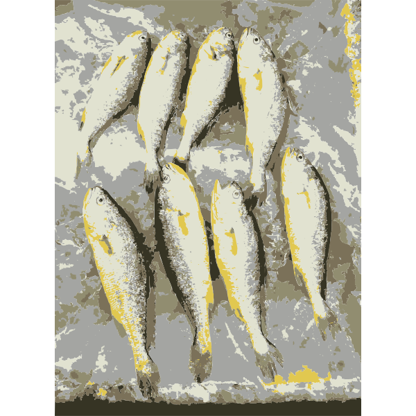 Fish from the market 1