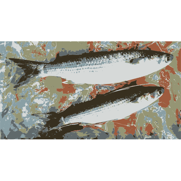 Fish from the market