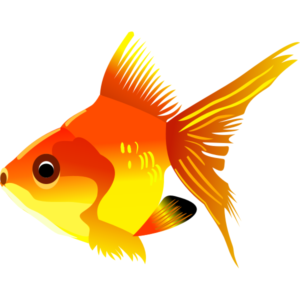 Goldfish vector drawing