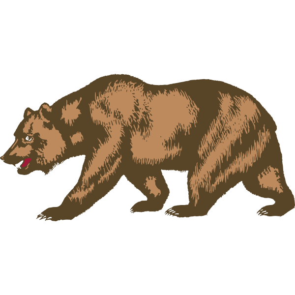 Zoo bear vector image