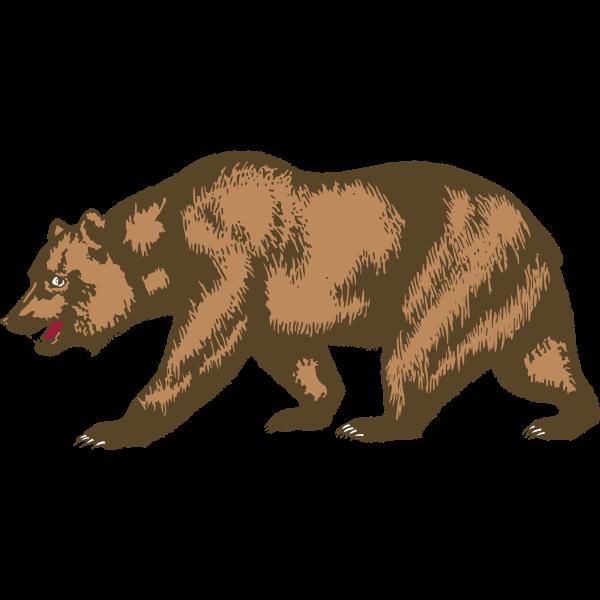Zoo bear vector image