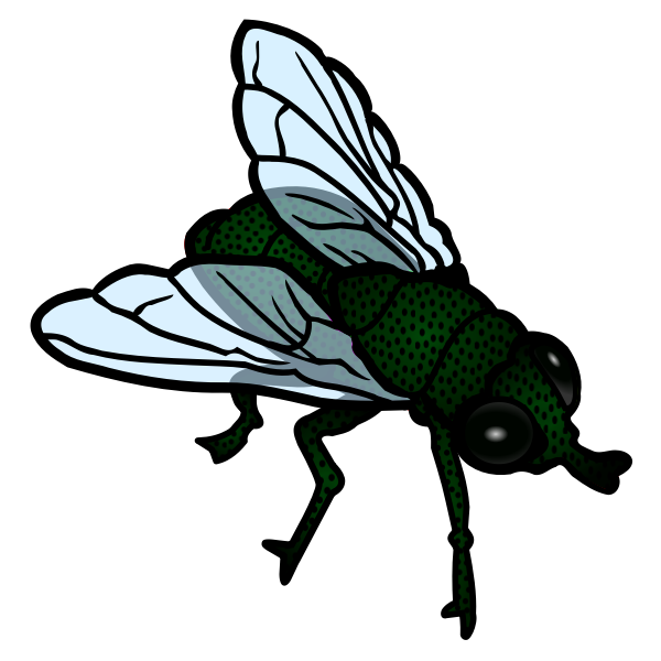 Fly colored line art vector image