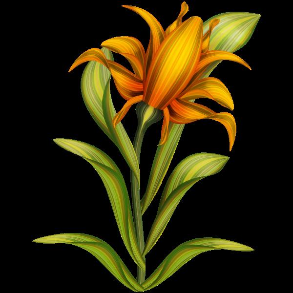 Floral plant color illustration