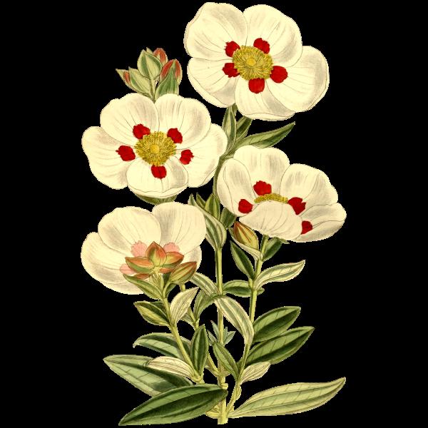 Flower151