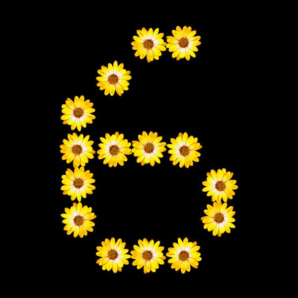 Floral number 6
