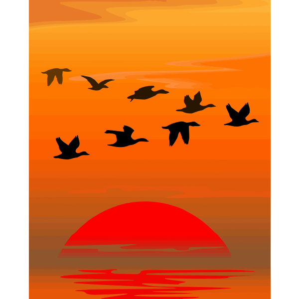 Flying birds-1575551745