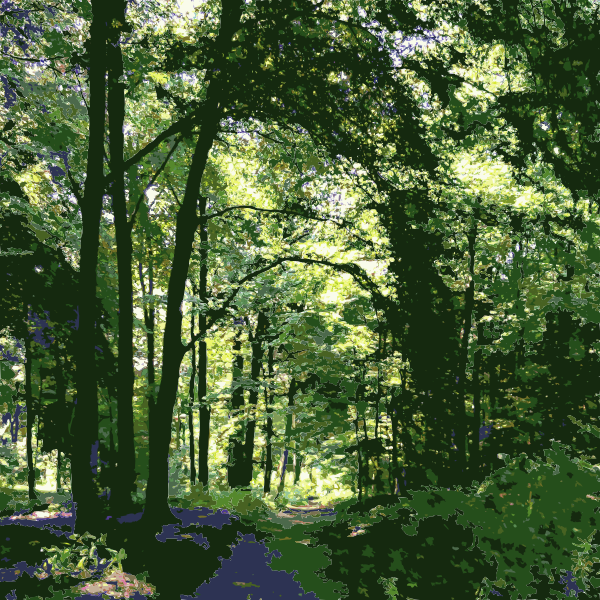 Forest shortcut 2015071500