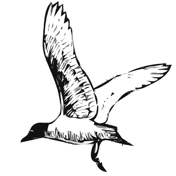 Franklins gull bird in flight vector image