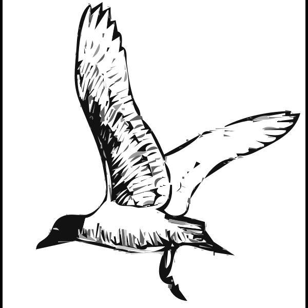 Franklins gull bird in flight vector image