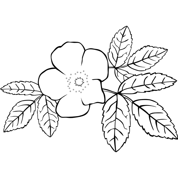 Vector image of line art rose in black and white