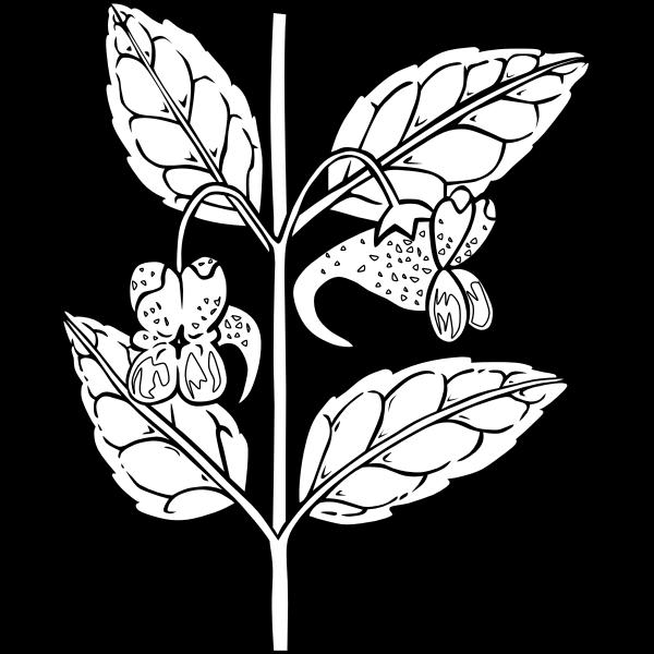 Herb branch