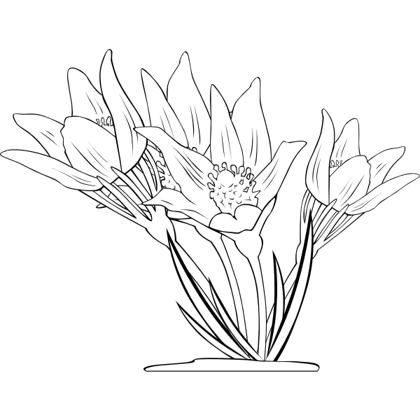 Anemone Patens Outline Vector