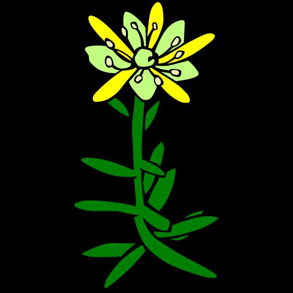 Saxifraga aizoides vector