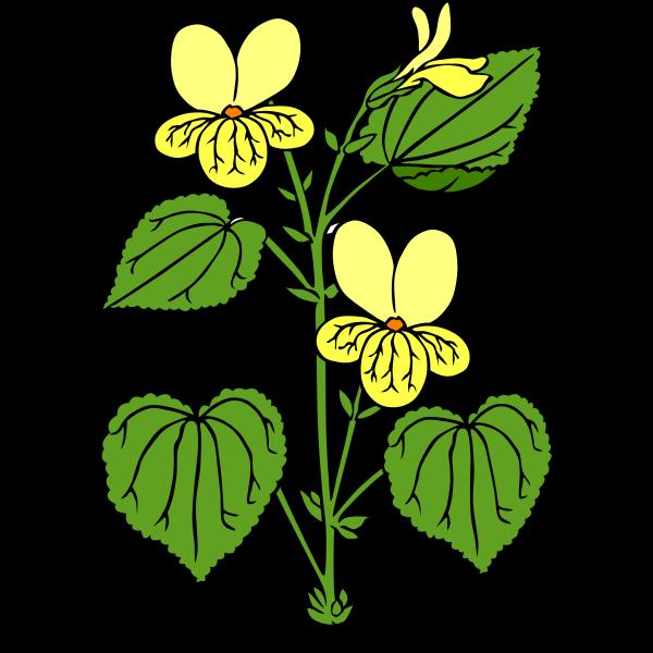 Viola glabella vector