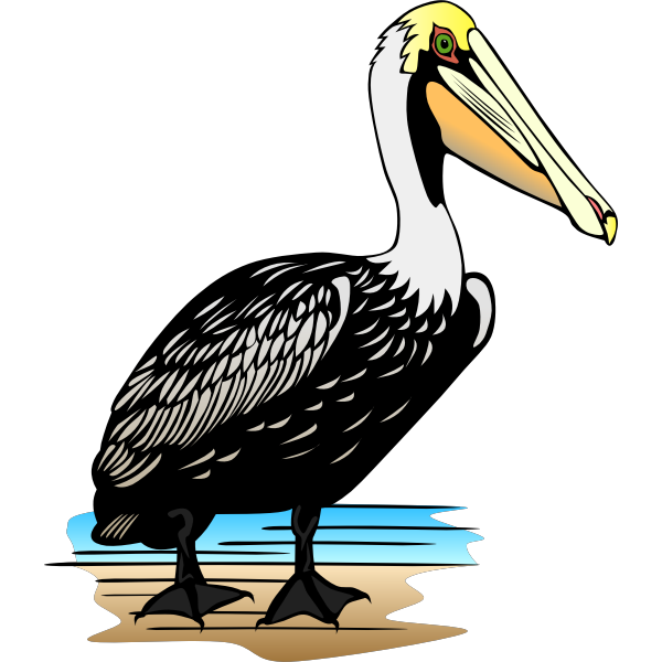 Pelican bird vector image