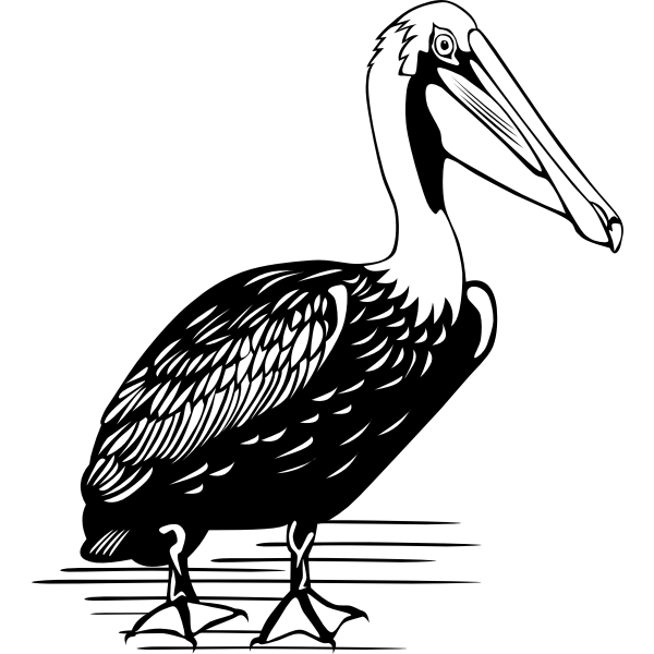 Pelican vector drawing