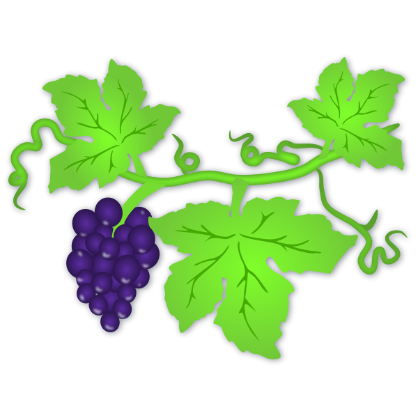 Grapes fruit and leaf