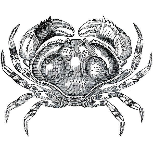 Grayscale crab